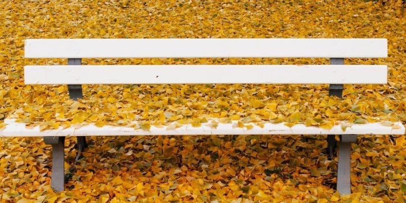 GINKGO BILOBA, autunno