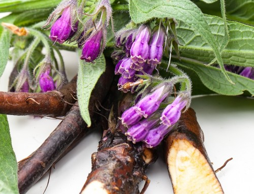Indispensabile Consolida: la pianta che rafforza e ripara