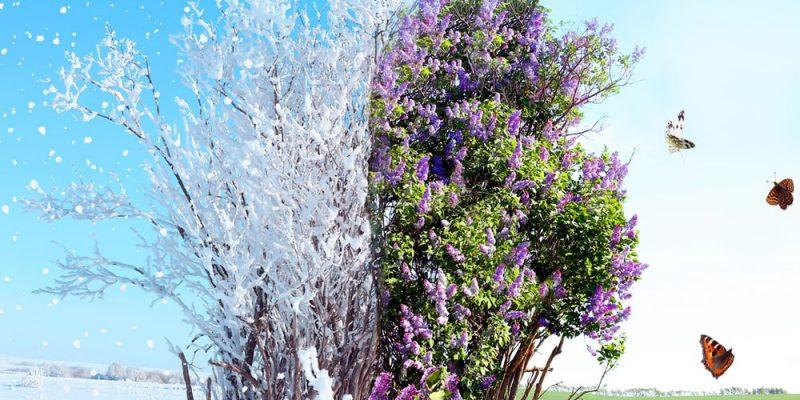 inverno e poi primavera