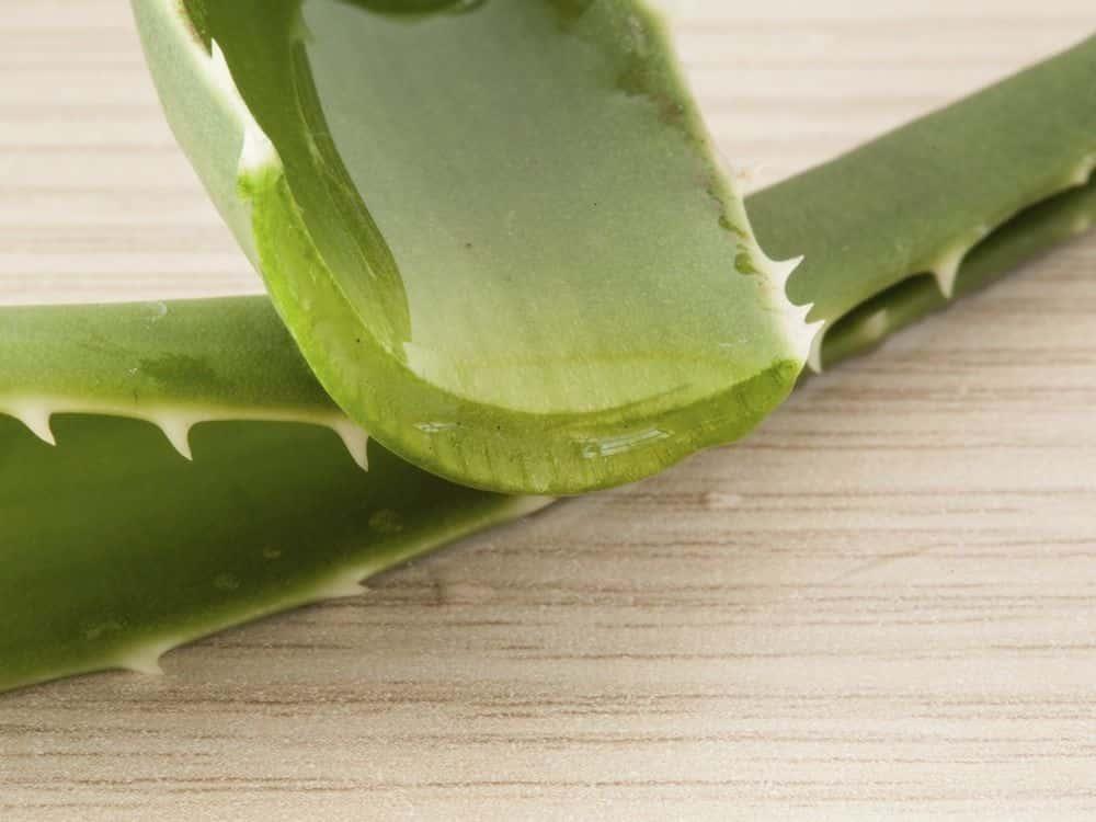 Composizione e proprietà dell'Aloe Arborescens