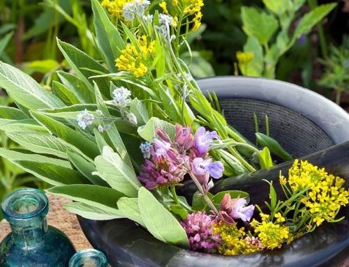 Phyto-Erg: curarsi con le erbe secondo la dottrina umorale