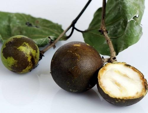 Nux vomica: il veleno mortale oggi rimedio indispensabile
