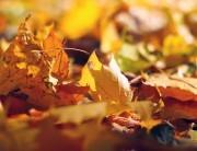 Affronta il cambio di stagione con il silicio