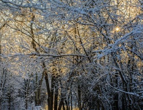Il misterioso calendario degli alberi