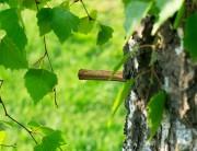 Pulizie di primavera: liberati dalle tossine con Betulla