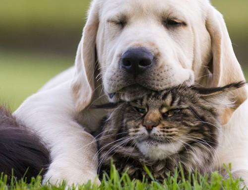 La fitoterapia per il tuo animale domestico