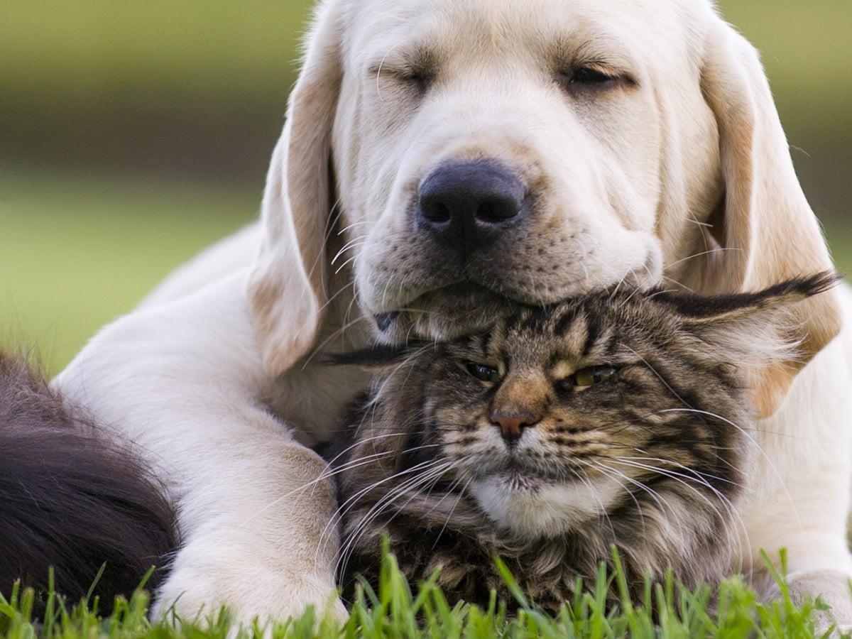 La fitoterapia per gli animali