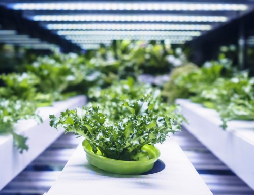 Digital food: la pazza rivoluzione biologica