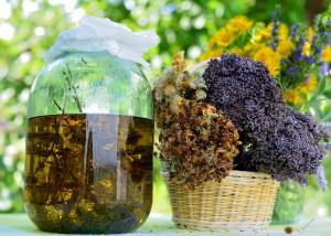 Solstizio d'estate: l'alchimia delle piante e del sole