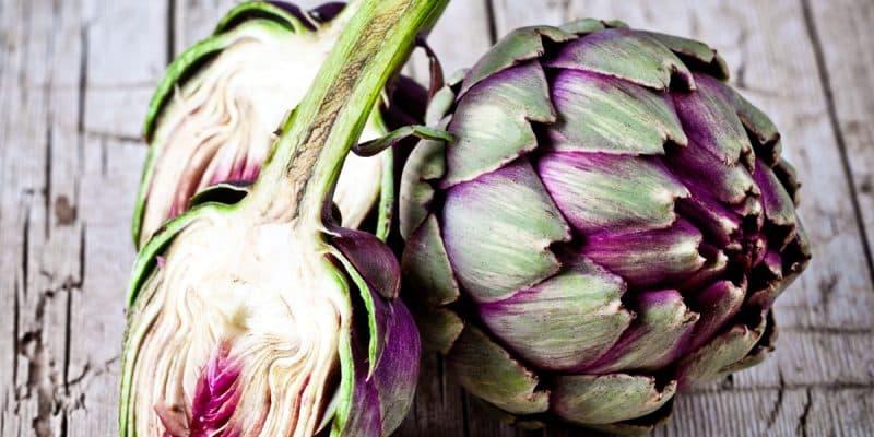 carciofo. la pianta preferita dai vecchi medici di famiglia