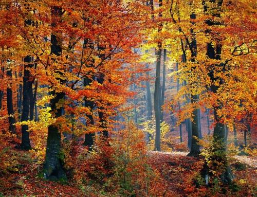 Shinrin-Yoku: il bosco che cura gli uomini