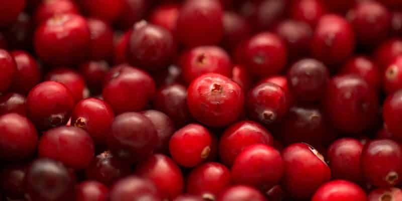 Cranberry: il mirtillo rosso rosso ha effetti che vanno oltre l'infezione delle vie urinarie.