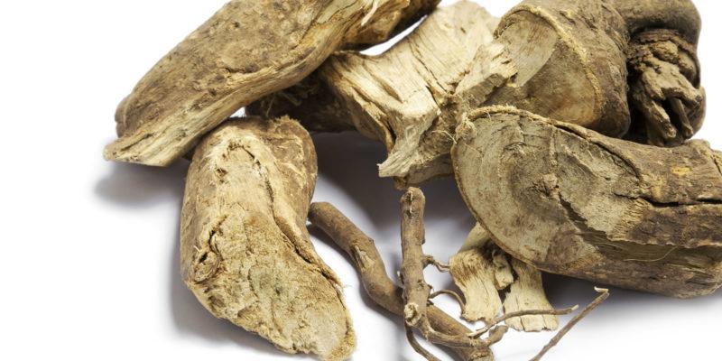 Eleuterococco: il ginseng indiano
