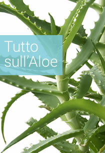 Guida all'Aloe