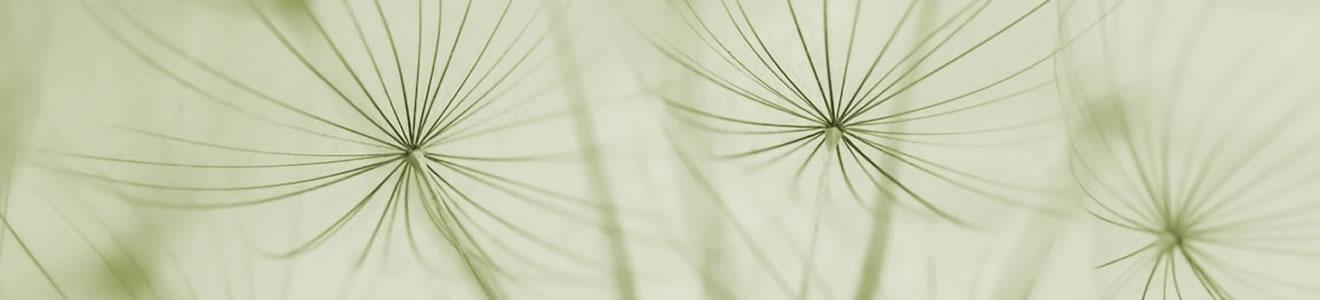 Ligne de Plantes da Natura Service